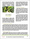 0000080962 Word Templates - Page 4