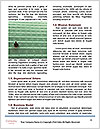 0000081004 Word Template - Page 4
