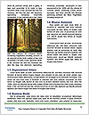 0000081037 Word Template - Page 4