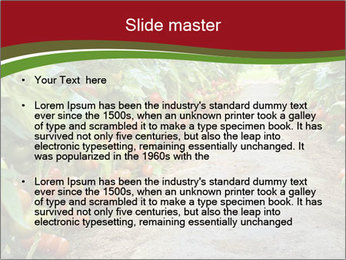 0000081072 PowerPoint Template - Slide 2