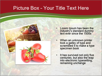 0000081072 PowerPoint Template - Slide 20