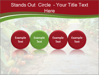 0000081072 PowerPoint Template - Slide 76