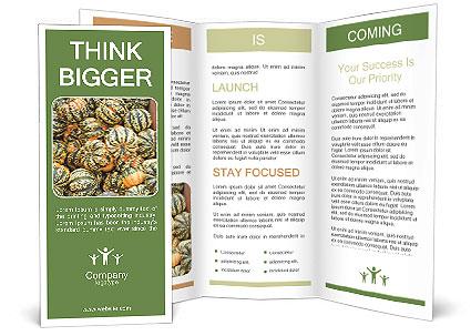 0000081097 Brochure Templates