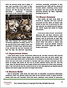 0000081112 Word Templates - Page 4