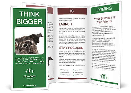 0000081131 Brochure Templates