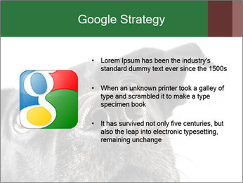 0000081131 PowerPoint Template - Slide 10