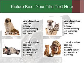 0000081131 PowerPoint Template - Slide 14