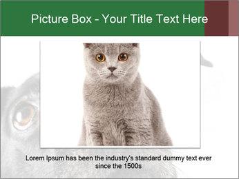0000081131 PowerPoint Template - Slide 16