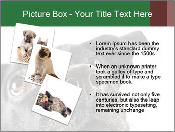 0000081131 PowerPoint Template - Slide 17