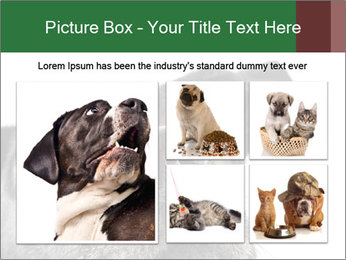 0000081131 PowerPoint Template - Slide 19