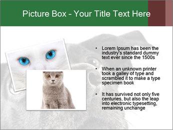 0000081131 PowerPoint Template - Slide 20