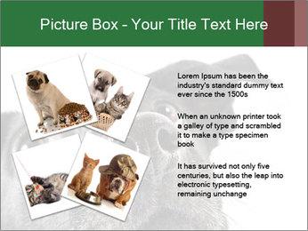 0000081131 PowerPoint Template - Slide 23