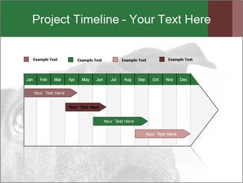 0000081131 PowerPoint Template - Slide 25
