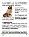 0000081131 Word Template - Page 4