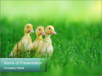 0000081149 PowerPoint Template - Slide 1