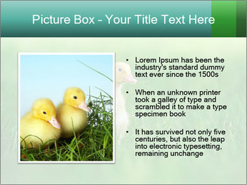 0000081149 PowerPoint Template - Slide 13