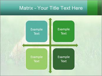 0000081149 PowerPoint Templates - Slide 37