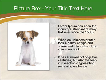 0000081166 PowerPoint Template - Slide 13