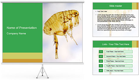 0000081168 PowerPoint Template