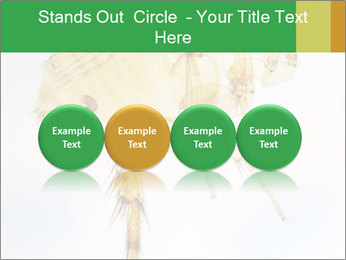 0000081168 PowerPoint Templates - Slide 76