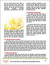 0000081191 Word Template - Page 4