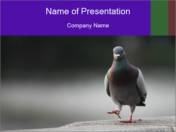 0000081201 PowerPoint Template - Slide 1