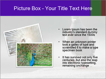 0000081201 PowerPoint Template - Slide 20