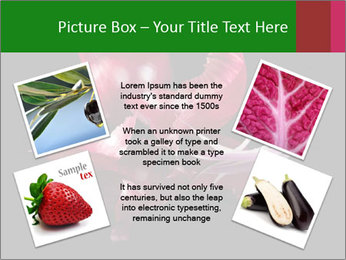 0000081226 PowerPoint Template - Slide 24