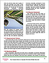 0000081226 Word Templates - Page 4