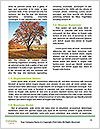 0000081233 Word Templates - Page 4