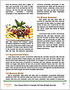 0000081245 Word Templates - Page 4