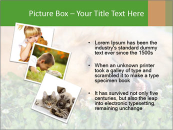 0000081292 PowerPoint Template - Slide 17
