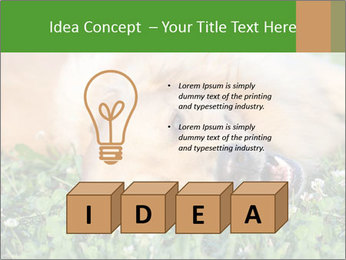 0000081292 PowerPoint Template - Slide 80