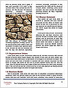 0000081327 Word Template - Page 4