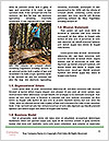 0000081338 Word Template - Page 4