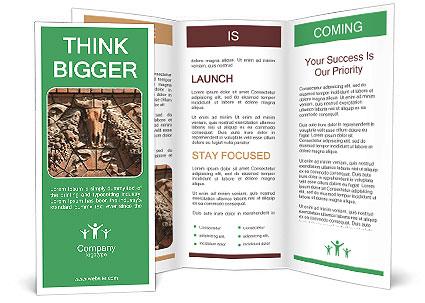 0000081346 Brochure Template