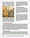 0000081362 Word Template - Page 4