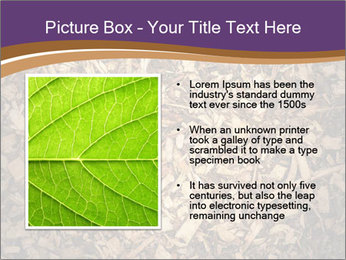 0000081369 PowerPoint Templates - Slide 13