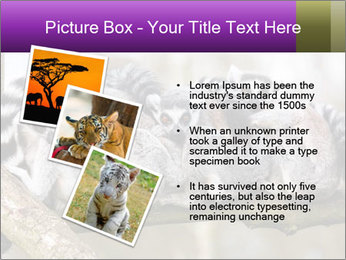0000081383 PowerPoint Template - Slide 17