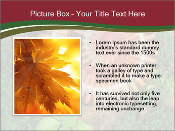 0000081390 PowerPoint Template - Slide 13
