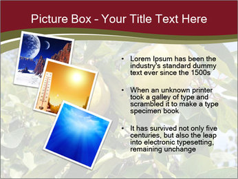 0000081427 PowerPoint Templates - Slide 17
