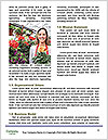 0000081455 Word Template - Page 4