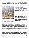 0000081471 Word Template - Page 4