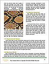 0000081473 Word Template - Page 4