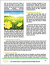 0000081489 Word Templates - Page 4