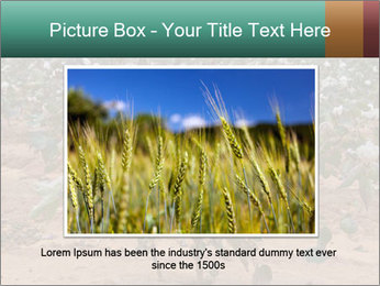 0000081491 PowerPoint Template - Slide 15