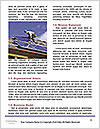 0000081528 Word Template - Page 4