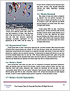 0000081532 Word Template - Page 4