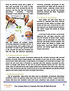 0000081540 Word Template - Page 4
