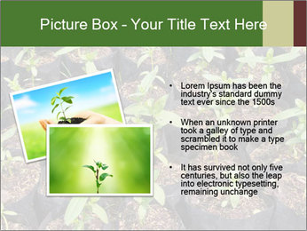 0000081552 PowerPoint Template - Slide 20